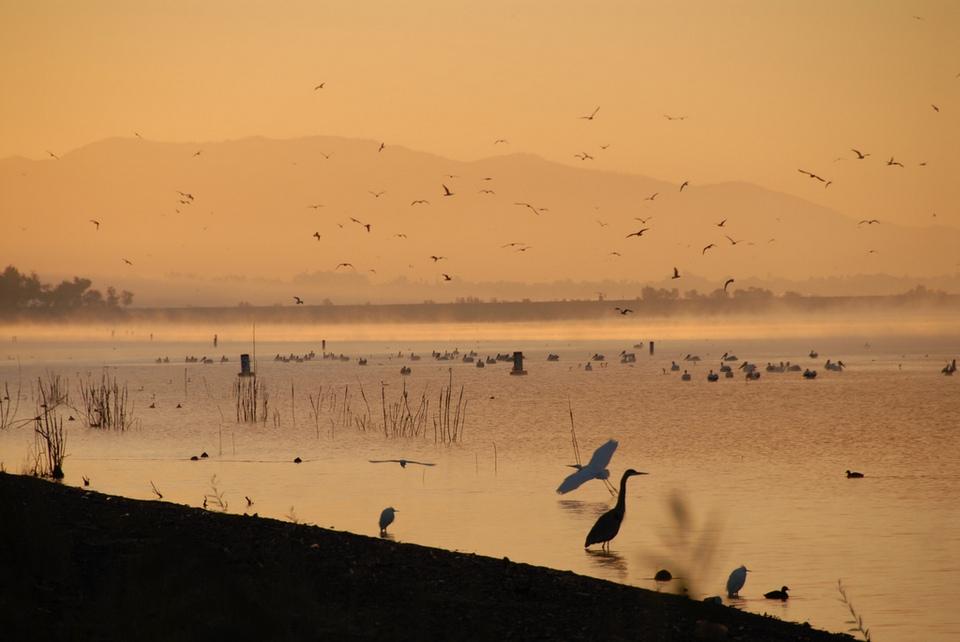 Lake Elsinore cranes