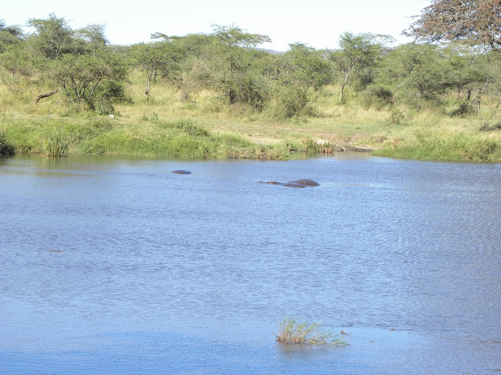 Another pond with hippos